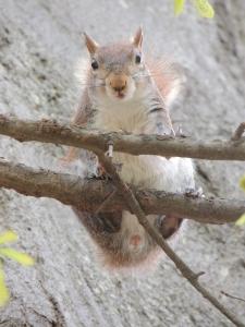 Squirrel im Piedmont Park
